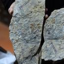 南京發現世界最古老花朵化石:與恐龍同齡花界鼻祖