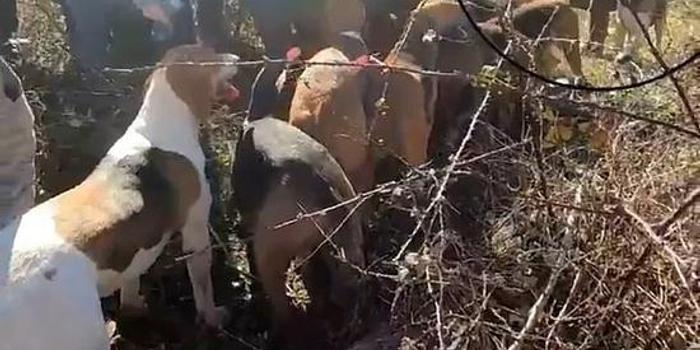 法國動物保護人士保護牡鹿時 獵人向其開槍