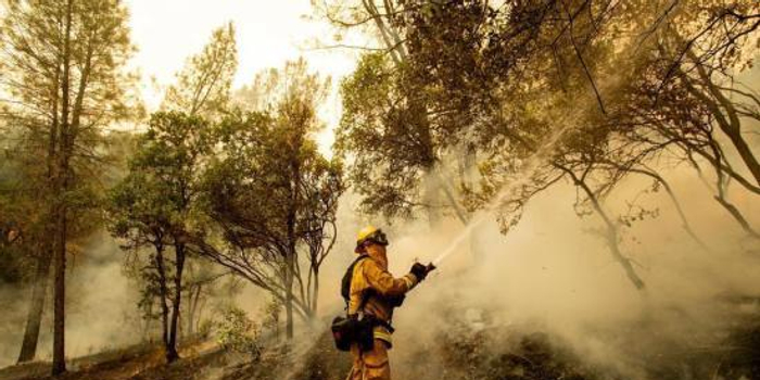 加州规模最大山火调查出炉 男子因扑灭黄蜂酿大火