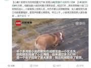 四川师大老师被指未谈拢酬金摔死所捡狗 学校回应
