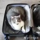 海南航空允许携带宠物进入客舱 每人限带1只