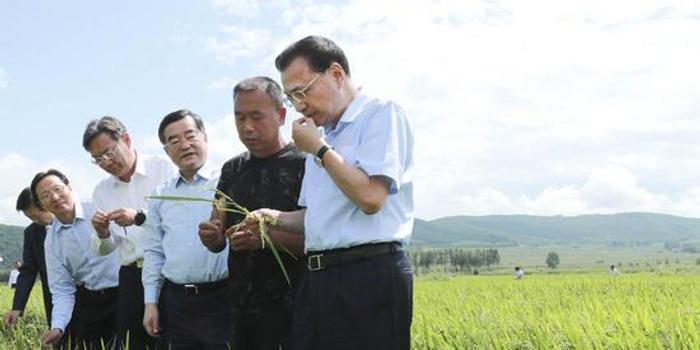 """李克强在稻田里对农民说:大米也能种出""""高大上"""""""