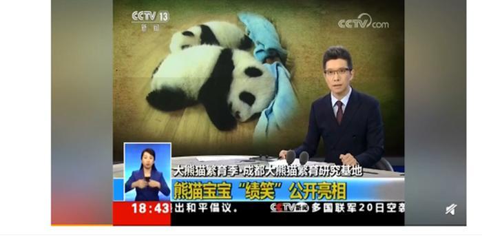 又来啦 熊猫也逃不过朱广权的段子