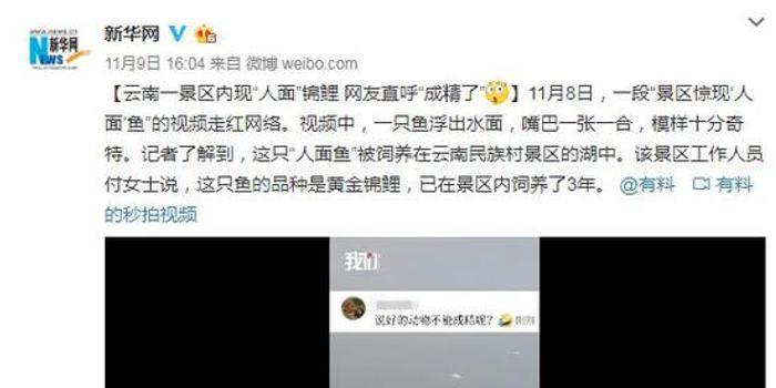 """云南一景区内现""""人面""""锦鲤 网友直呼""""成精了"""""""