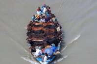 孟加拉20头牛乘船过河超淡定