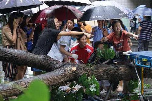 树倒砸中路人:女学生赤脚抬树救人 有人跪地为伤者撑伞