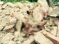 拆迁户龚雪辉之死:埋在她亲手盖起房子的瓦砾中