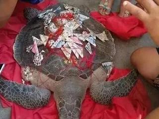 渔民捕百斤海龟 绑人民币放生