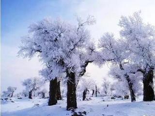 内蒙古罕见霜降胡杨林