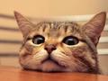 """""""猫经济""""兴起:颤抖吧,空巢青年"""