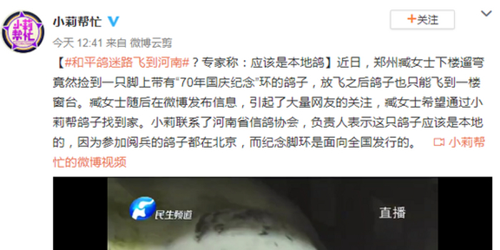 国庆和平鸽迷路飞到河南?专家称:应该是本地鸽