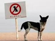 新京报:用异烟肼毒狗 不如制中国版《恶犬法案》