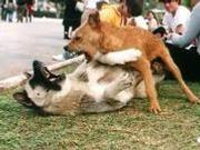 公号晓看|狗是无辜的,错的是人