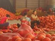 寿光灾后三十天:农民赶天凉前抢种上作物挽回损失