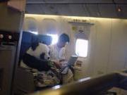 捉谣记|熊猫系着安全带和饲养员一起坐飞机?真相在这里