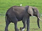 捉谣记|北京动物园两吨重的大象丢了?官方回应:谣言