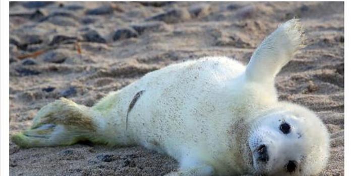 法国海豹接连遭分尸 凶手被悬赏1万欧元