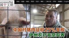 美国猪农喊话特朗普:我们要出口 加什么关税