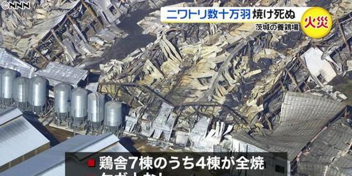 日本一养鸡场失火 30多万只鸡丧生火海
