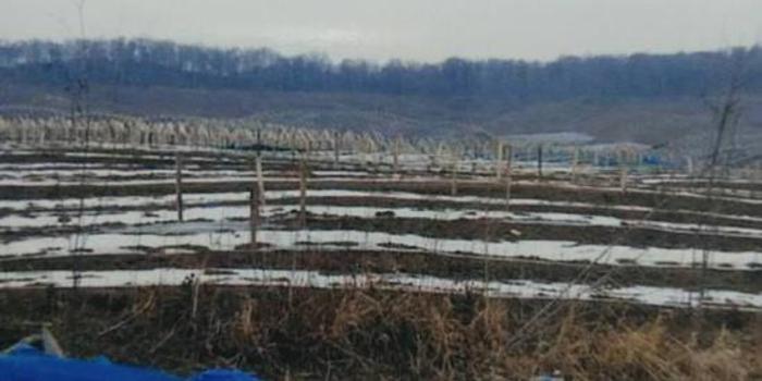黑龙江尚志回应六千亩密林疑被毁:已成立调查组