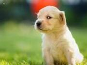 涉狗事件频出 中青报:爱人都做不到谈什么爱狗
