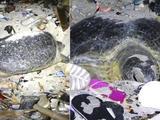 海滩铺满垃圾海龟拨开垃圾产