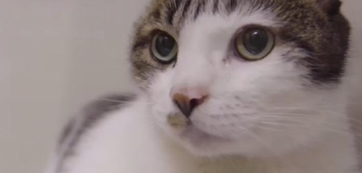 猫咪缺陪伴患上抑郁症 舔伤自己