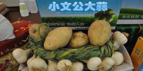 小文公大蒜申报国家地理标志保护产品
