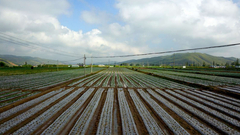 【2018网络媒体宁夏行】西吉县硝河隆堡蔬菜标准化新技术集成示