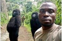 大猩猩与管理员自拍照火了 原来我们可以这样相处