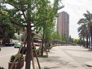 提升道路品质 打造成都市民眼中的最美街道