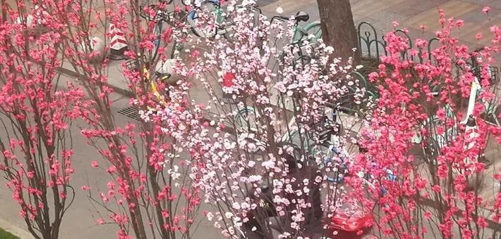 成都街头桃花盛开 增添了多彩春天气息