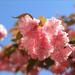 #花开好了#