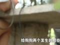 今日关注:四川男性侵母狗被裸体群殴