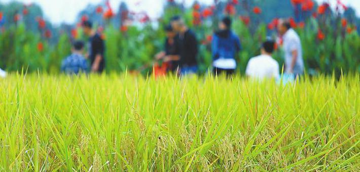 首个中国农民丰收节 四川各地喜气洋洋