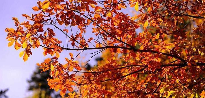 最多彩的季节到来 探访四川秋日绝美秘境