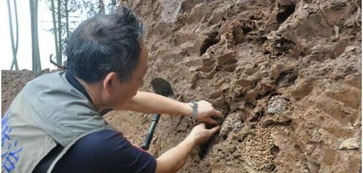 村民建房时挖到白蚁窝 让人头皮发麻