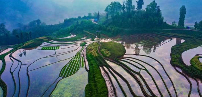 雅安梯田蓄满水 呈现生机勃勃农耕图