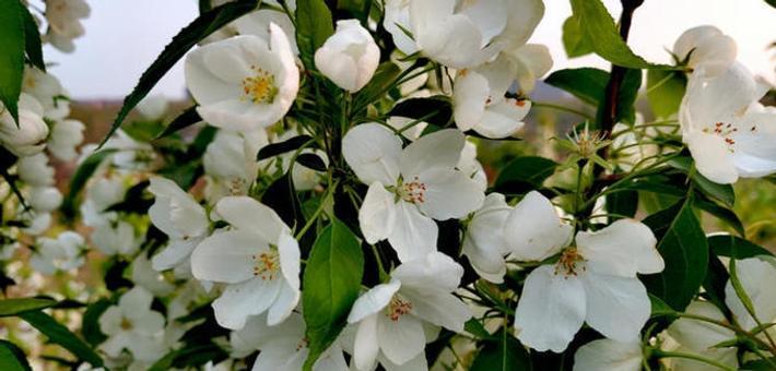 暖暖的春风迎面吹 后山花儿朵朵开