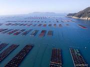 山东上半年海洋产业生产总值为3300亿元 同比增长8%
