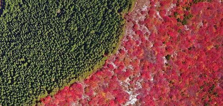济南那座半红半绿的山又开始卖萌了