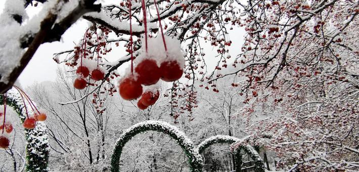 沂蒙山迎来今冬首雪 银装素裹 美不胜收