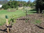 山东发布灾后土壤修复指导意见 剪除断枝疏除烂果