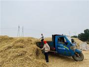 美了环境 乐了百姓 淄博市临淄区小麦实行集中脱粒!