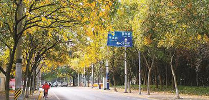 上海29条落叶景观道落叶不扫