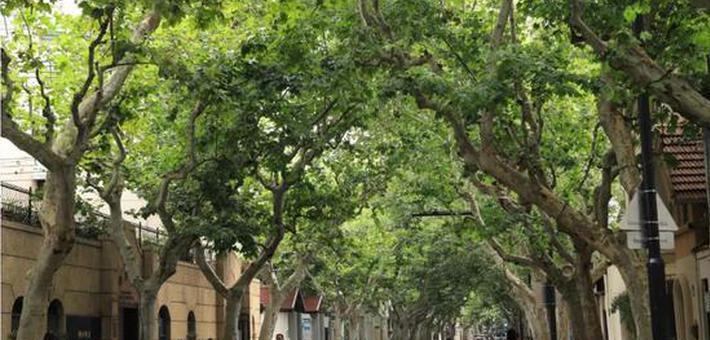 徐汇区林荫道增至28条