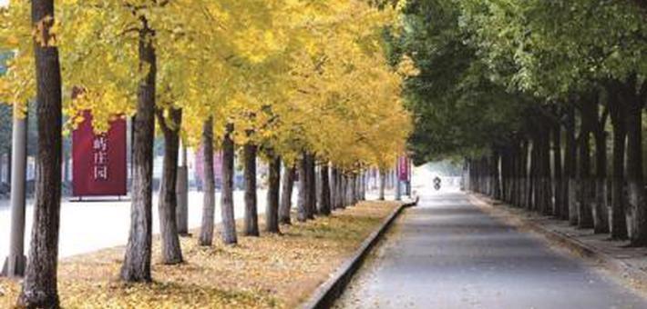 落叶不扫:让城市增添更多底色