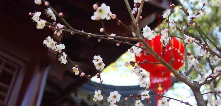 2020松江全年赏花攻略