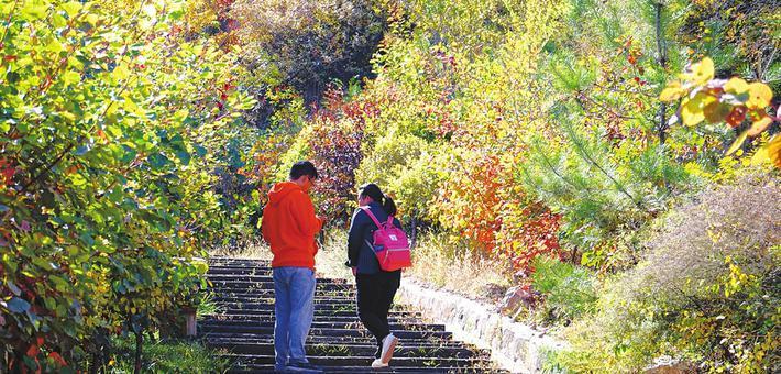 登崛山围赏秋色