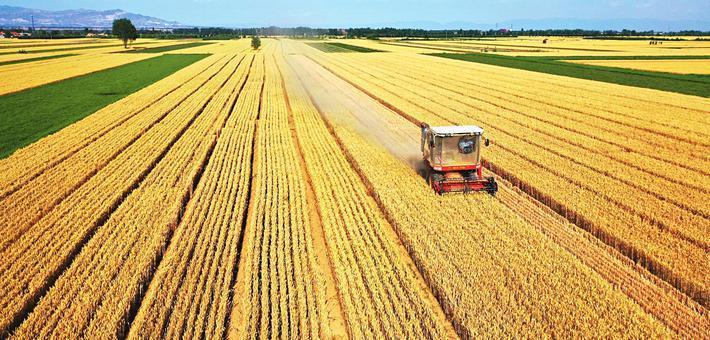 晋南地区陆续进入小麦成熟期